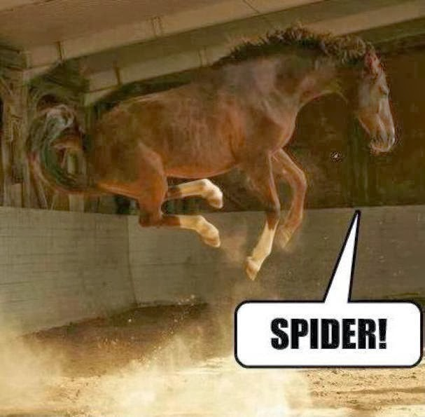 blog-spooked-horse